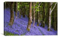 Bluebells in a sloping wood, Canvas Print