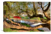 Twisted tree by Dawlish brook early morning, Canvas Print