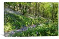 Road through the Bluebell Wood, Canvas Print