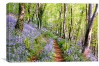Bluebells woods near  Looe in South East Cornwall, Canvas Print