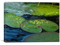 Waterdrops on Lilypads, Canvas Print