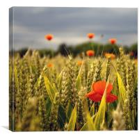 Amongst The Crop, Canvas Print