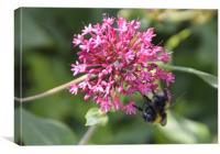 Bee pretty in pink, Canvas Print