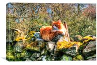 Cat On Wall, Canvas Print