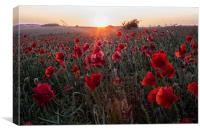 Poppies at Sunset, Canvas Print