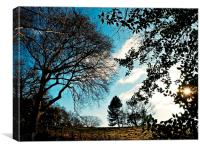 Looking up the hill at Warley Place, Canvas Print