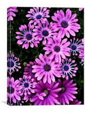 Floral patterns, Canvas Print