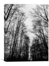 An avenue of trees in winter - portrait, Canvas Print