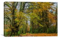 Autumn In Little and Greater Coombe Woods, Canvas Print