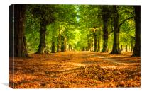 Golden Avenue- Clumber Park -Lime Tree Avenue, Canvas Print