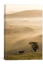 Ewe with a view, Canvas Print