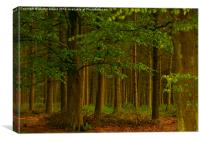 The Forest Woodland, Canvas Print