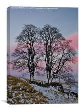 Snowy Winter Trees, Canvas Print