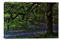 The Bluebell Woodland Glade, Canvas Print