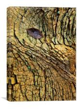 Decaying Tree Abstract, Canvas Print