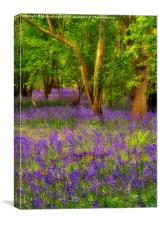 Dreamy Spring Bluebell Wood, Canvas Print