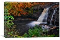 Hamsterley Forest waterfall in Autumn, Canvas Print