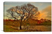 WinterTree on the River Tweed, Canvas Print