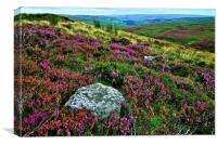 Heather on the Grouse Moor, Canvas Print