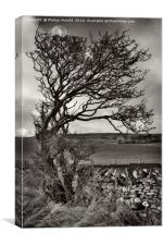 Windswept Winter Tree, Canvas Print