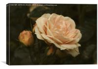Only a Rose, Canvas Print