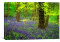 Spring Bluebell Wood, Canvas Print