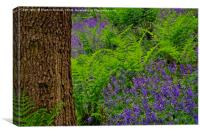 Bluebell Wood Colours, Canvas Print