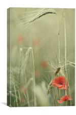 Poppies and wheat ears, Canvas Print