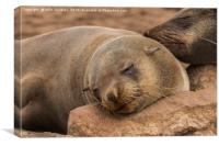 Fur Seal Basking at Cape Cross, Namibia, Canvas Print