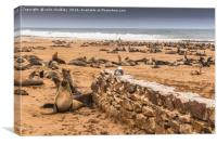 Cape Cross Fur Seals - Namibia, Canvas Print