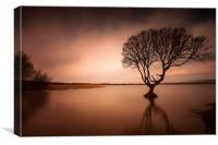 Kenfig pool and tree, Canvas Print