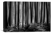 Down in the woods, Canvas Print