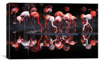 Flamingos using an oil painting filter, Canvas Print