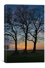 Three trees in silhouette, Canvas Print