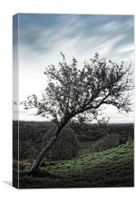 Leaning Tree, Canvas Print
