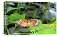 Malay Lacewing (Cethosia cyane), Canvas Print