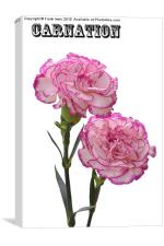 A pair of beautiful carnations, Canvas Print