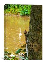 A Cute squirrel pops out from behind a tree!, Canvas Print