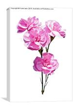 Beautiful, colourful carnations (Pinks), Canvas Print