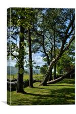 An odd row of trees in Harlech, Canvas Print