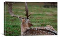 Whos there Deer, Canvas Print