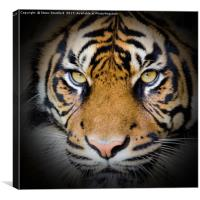 Tiger in the shadow, Canvas Print