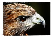 Harris Hawk Fractal, Canvas Print