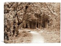 Sepia Walk Through the Trees, Canvas Print