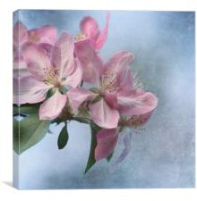 Spring Blossoms, Canvas Print