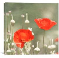 Red Poppy Flowers, Canvas Print