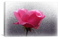 pink over gray, Canvas Print