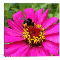 bumblebee at work, Canvas Print