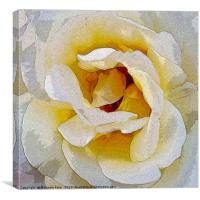 shades of white to yellow, Canvas Print