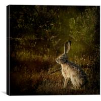 Hare, Canvas Print